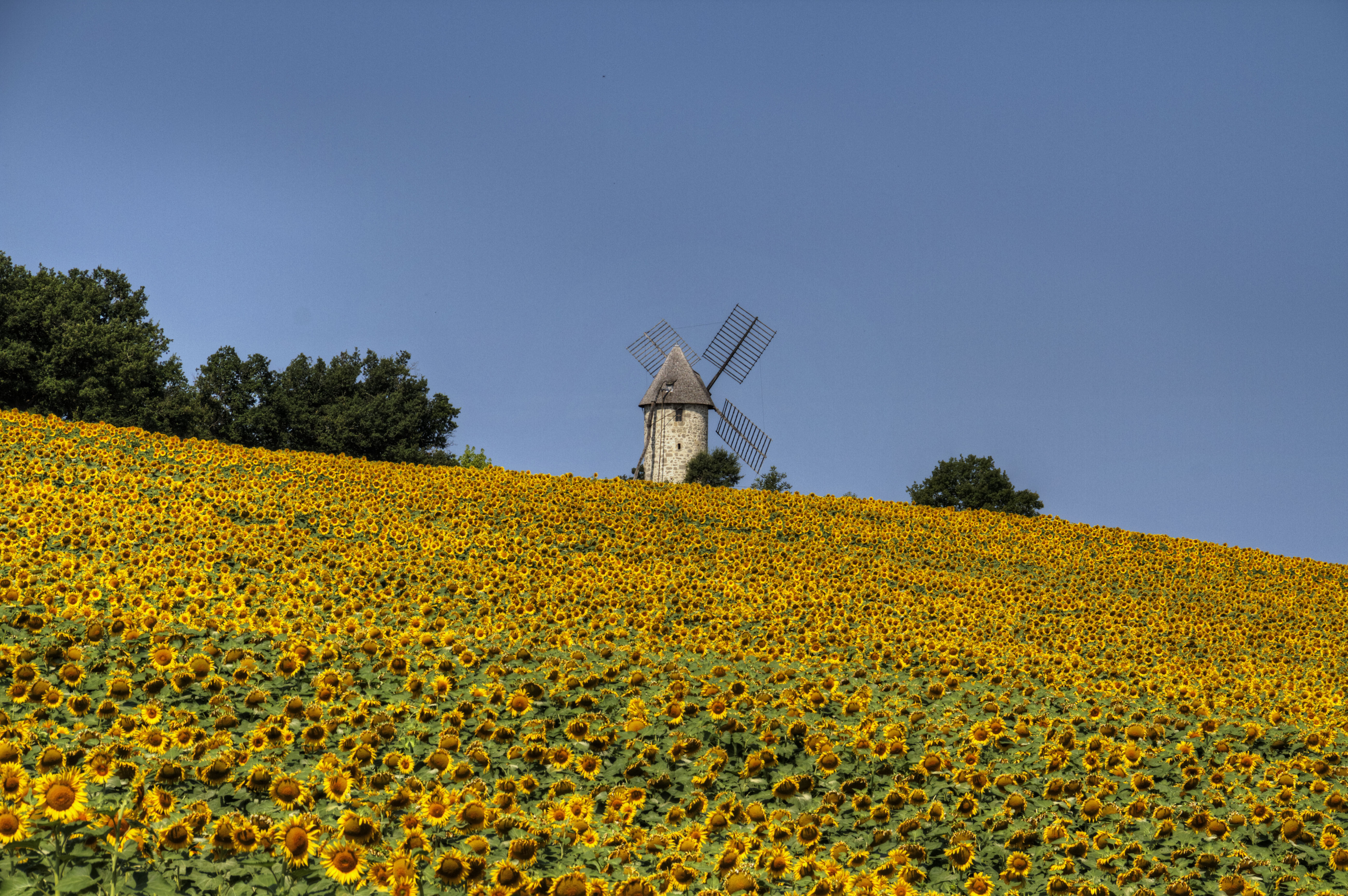 Moulin de Coulx et champ de tournesols
